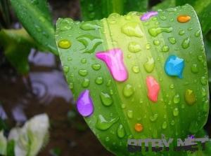 1212554676__92730, color, colors, цвет, цвета, колор, колорс, лист, капли, дизайн, основные принципы дизайна