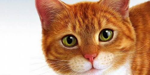 Кейс - продвижение ветеринарного сайта